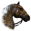 ON-icon-horse-Palomino.png