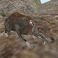 A Rat in Morrowind