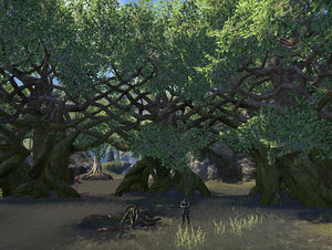 ON-place-Rootwater Grove.jpg
